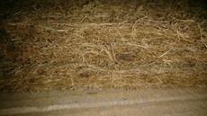 Жесткий тонкий матрас из кокоса SoNLaB topper kokos190*180 см